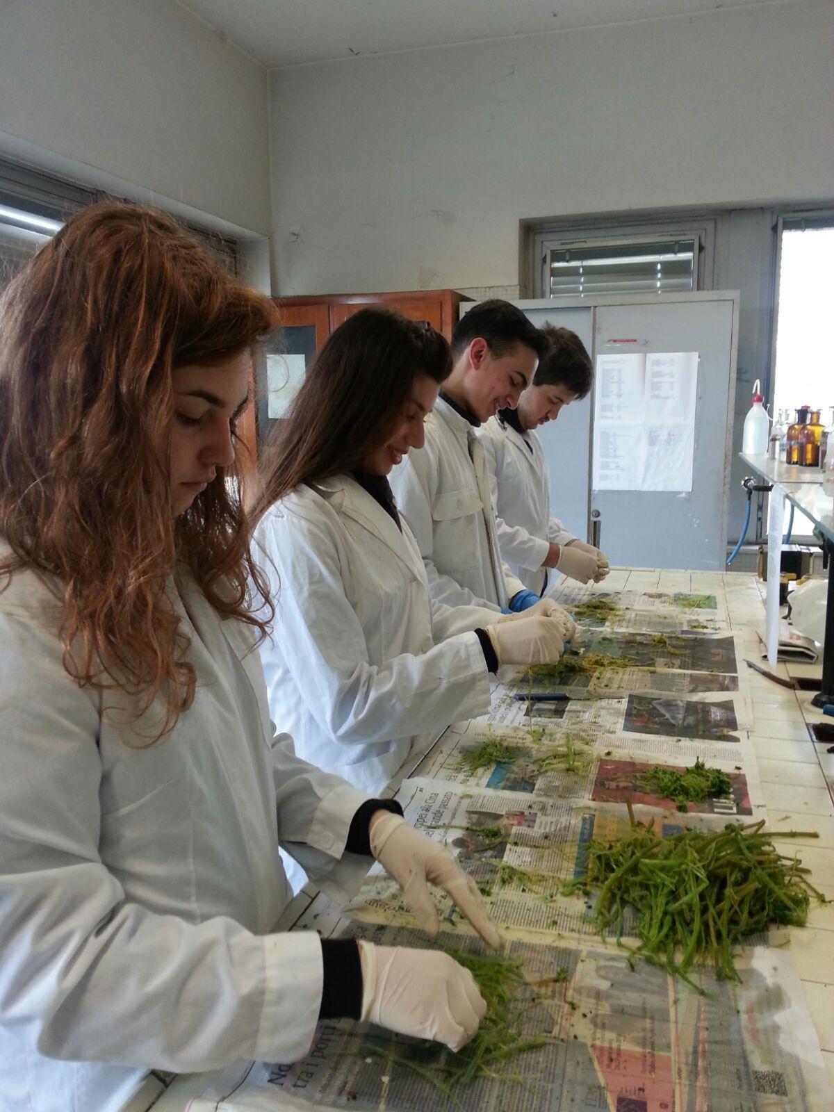 Isolanti naturali ecologici  -  Fibre di ginestra, ortica ed agave: isolanti termici e fonoassorbenti