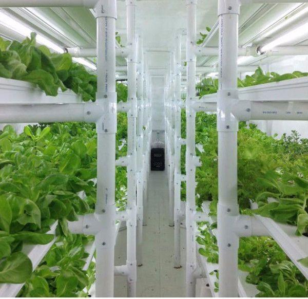 Agricoltura Urbana - 432 Heathy Zone -
