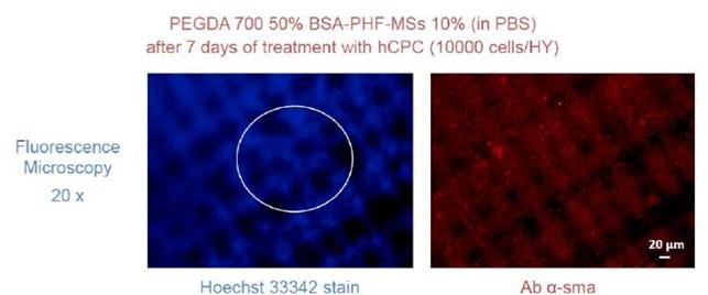 NeMO - Stampa 3D per ingegneria tissutale in campo biomedico